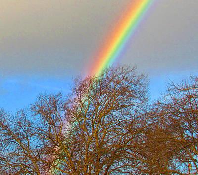 Photograph - Rainbow Over Trees by Bonnie Muir