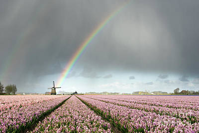 Photograph - Rainbow Over Windmill And Flower Fields by IPics Photography