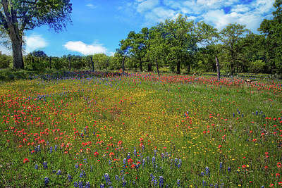 Photograph - Rainbow Pallet In The Hill Country by Lynn Bauer