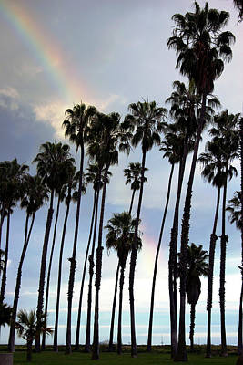 Photograph - Rainbow Palms by Balanced Art
