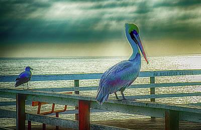 Photograph - Rainbow Pelican by Joseph Hollingsworth