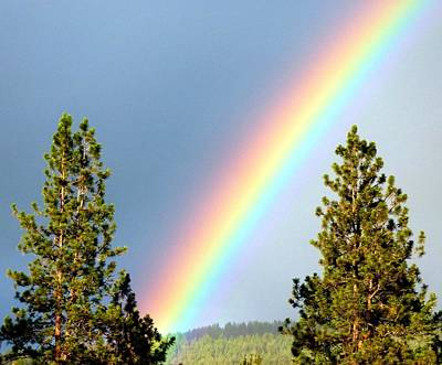 Photograph - Rainbow Radiance by Will Borden