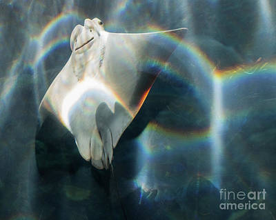 Photograph - Rainbow Reflection by Cheryl Del Toro