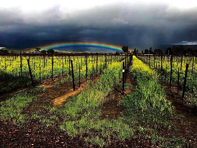 Photograph - Rainbow Rider Napa Valley by Cadence Spalding