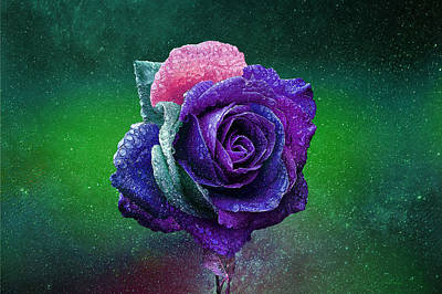 Photograph - Rainbow Rose Among The Stars by Ericamaxine Price