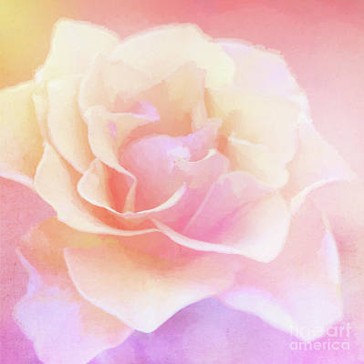 Photograph - Rainbow Rose by Anita Pollak
