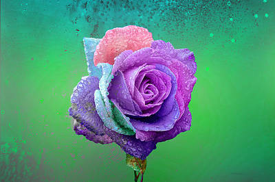 Photograph - Rainbow Rose by Ericamaxine Price