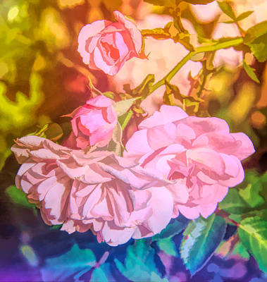 Photograph - Rainbow Roses by Susan Crossman Buscho