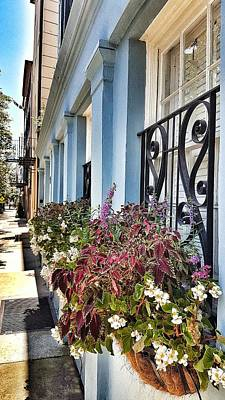 Owls - Rainbow Row Charleston SC by Nadia Seme