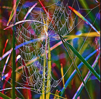 Photograph - Rainbow Spiderweb by Buddy Scott