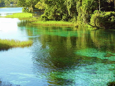 Photograph - Rainbow Springs State Park by D Hackett