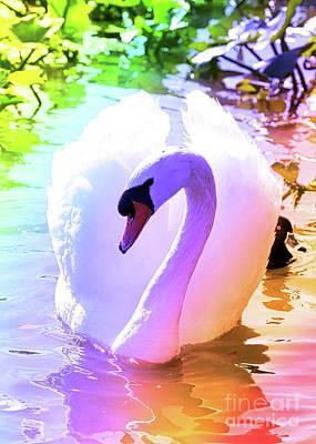 Photograph - Rainbow Swan by Carol Groenen