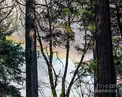 Photograph - Rainbow Through The Trees by Cheryl Del Toro