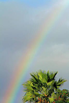Photograph - Rainbow To Palm by Shoal Hollingsworth