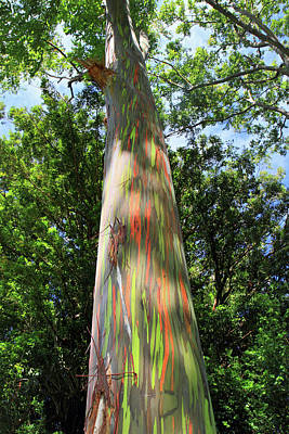 Photograph - Rainbow Tree by Pierre Leclerc Photography