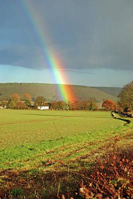 Photograph - Rainbow Tree by Richard Gibb