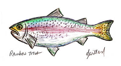 Drawing - Rainbow Trout  by Deborah Willard