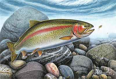 Rainbow Trout Art Print by Jon Wright