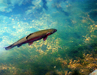 Photograph - Rainbow Trout by Marty Koch
