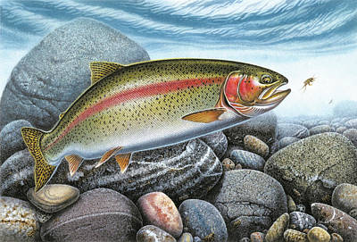 Flies Painting - Rainbow Trout Stream by JQ Licensing