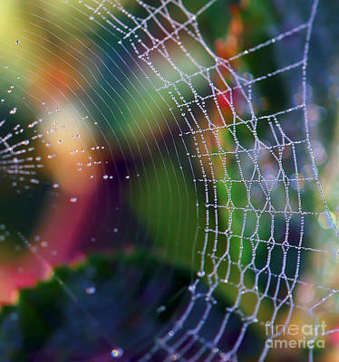 Photograph - Rainbow Web by Kerri Farley