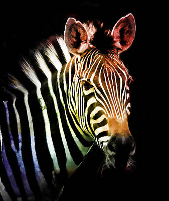 Photograph - Rainbow Zebra by Athena Mckinzie