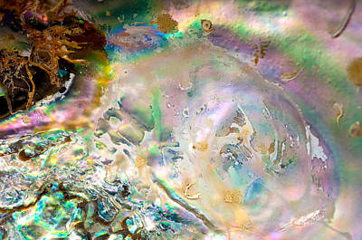 Rainbows And Seaweed Art Print by Joy Gerow
