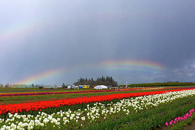 Photograph - Rainbows At Tulip Festival by David Gn