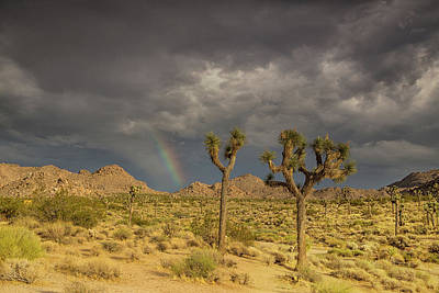 Joshua Tree Np Photograph - Rainbows Thunderstorms And Sunsets by Kunal Mehra