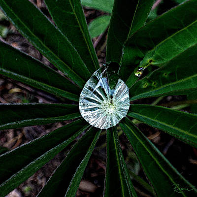 Photograph - Raindrop Ammonite by Rasma Bertz