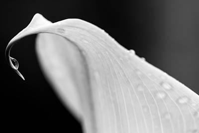 Photograph - raindrop-BW by Jonathan Nguyen