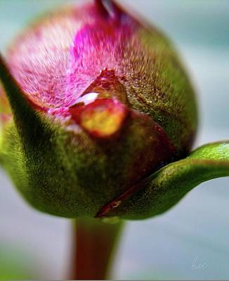 Photograph - Raindrop On Peonie by Bruce Carpenter