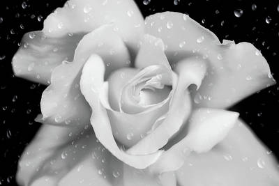 Art Print featuring the photograph Raindrops On Rose Black And White by Jennie Marie Schell