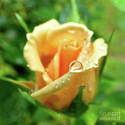 Photograph - Raindrop On Rose Bud by Jean Wright