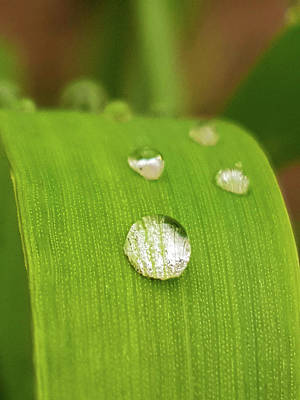 Photograph - Raindrop by Tiffany Erdman