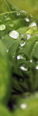 Jerry Sodorff Royalty-Free and Rights-Managed Images - Raindrop Trail by Jerry Sodorff