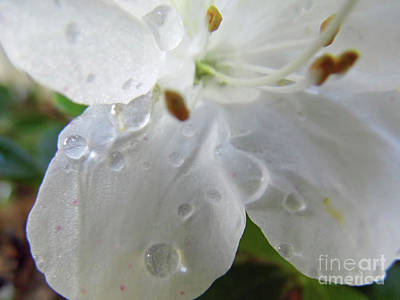 Photograph - Raindrop White by D Hackett