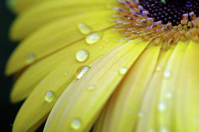 Photograph - Raindrops #1 by Edward Congdon