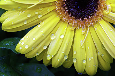 Photograph - Raindrops #2 by Edward Congdon