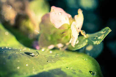 Photograph - Raindrops And Sunshine by Priya Ghose