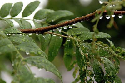 Photograph - Raindrops by JT Lewis