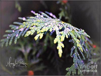 Photograph - Raindrops  by MaryLee Parker