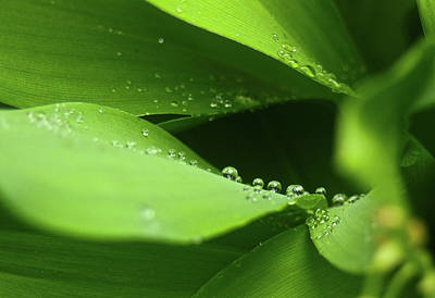 Mauverneen Blevins Photograph - Raindrops by Mauverneen Blevins