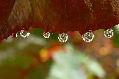 Raindrops On A Red Leaf Art Print by Patricia Strand