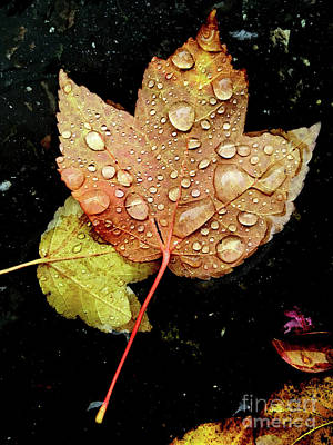 Photograph - Raindrops On Fall Leaf by Jim And Emily Bush