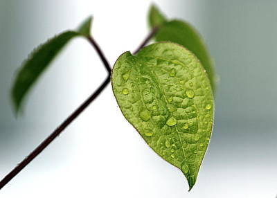 Photograph - Raindrops On Leaves by Joseph Skompski