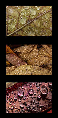 Ira Marcus Royalty-Free and Rights-Managed Images - Raindrops on Leaves Triptych by Ira Marcus