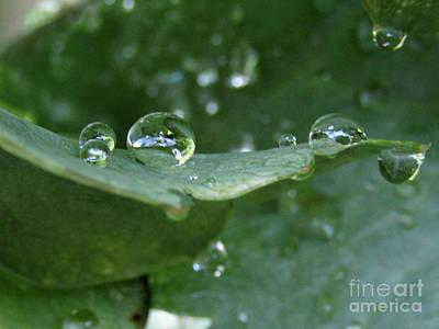 Photograph - Raindrops On Poppy Leaf #3 by Kim Tran