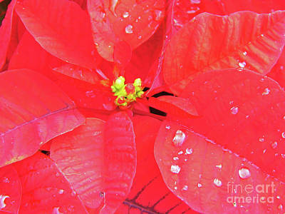 Photograph - Raindrops On Red by D Hackett