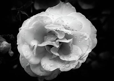 Photograph - Raindrops On Roses by Alison Frank